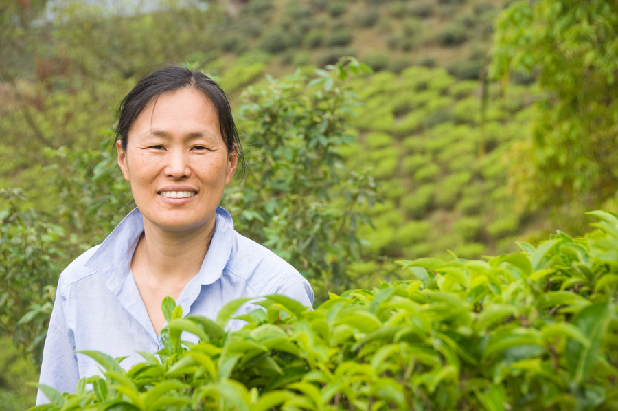 Amanda in Darjeeling tea field